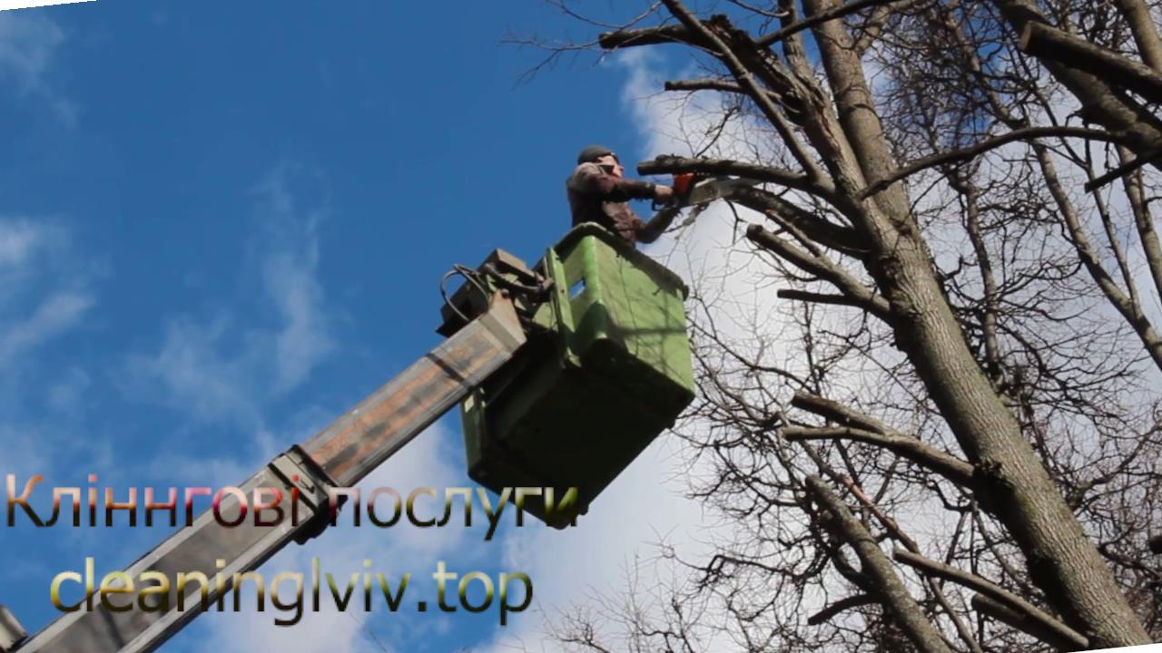 Обрізка дерев Львів